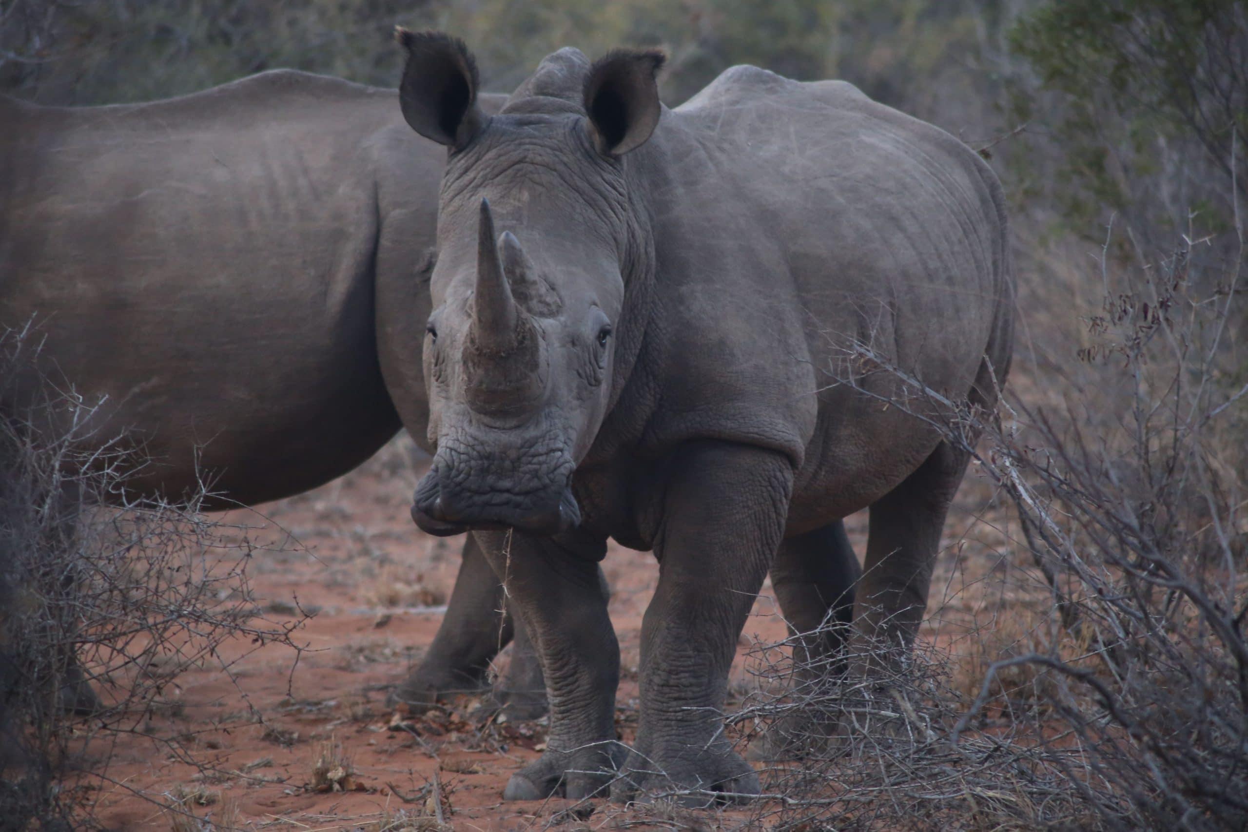 CITES rhinos