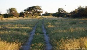 conservation in Africa