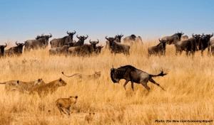 The Wildlife Economy in Africa
