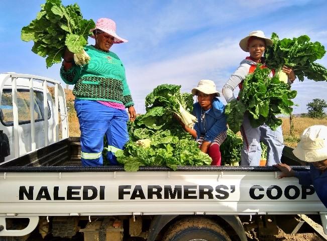 Naledi Harvest Festival